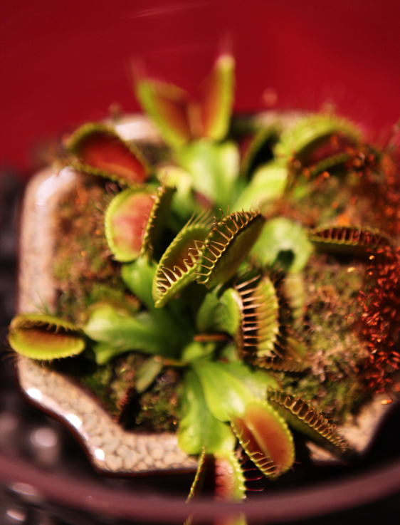 plantlovers2