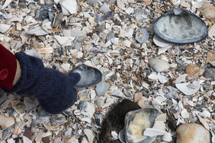 Alternative plan of action : Sea shells © Karoline Hjorth & Riitta Ikonen