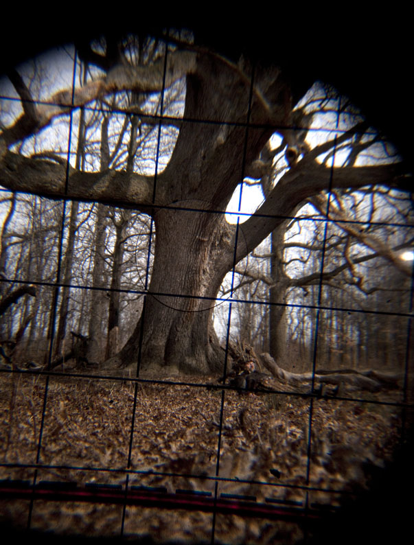 Woody and the oak through Mamiya eyes © Karoline Hjorth & Riitta Ikonen