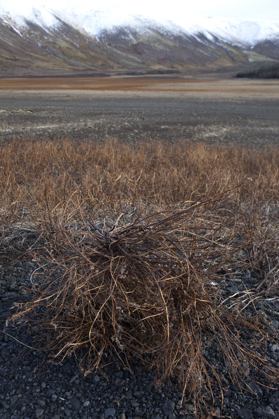 Crispy shrubs with a bend © Karoline Hjorth & Riitta Ikonen