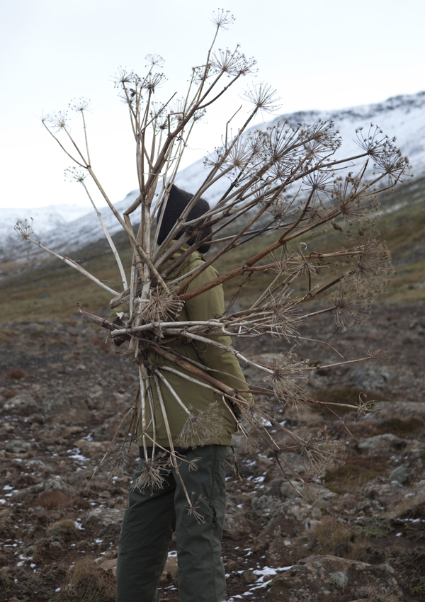 The great Kvanna plant has mighty medicinal powers © Karoline Hjorth & Riitta Ikonen