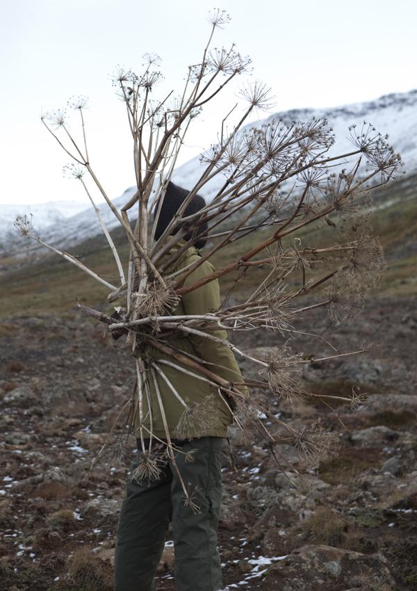 The great Kvanna plant has mighty medicinal powers © Karoline Hjorth & Riitta Ikonen