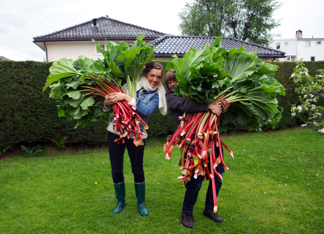 One for the history books: Astrid´s record-breaking rhubarb. © Karoline Hjorth & Riitta Ikonen