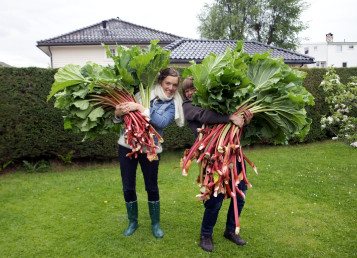 One for the history books - The day we picked rhubarb the size of Riitta. © Karoline Hjorth & Riitta Ikonen
