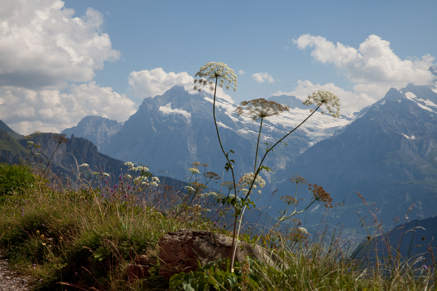 On our second adventure day we took the railway to the Schynige Platte Botanical Alpine Garden, the first in the Alps. We saw two thirds of Switzerland's entire Alpine flora. © Karoline Hjorth & Riitta Ikonen